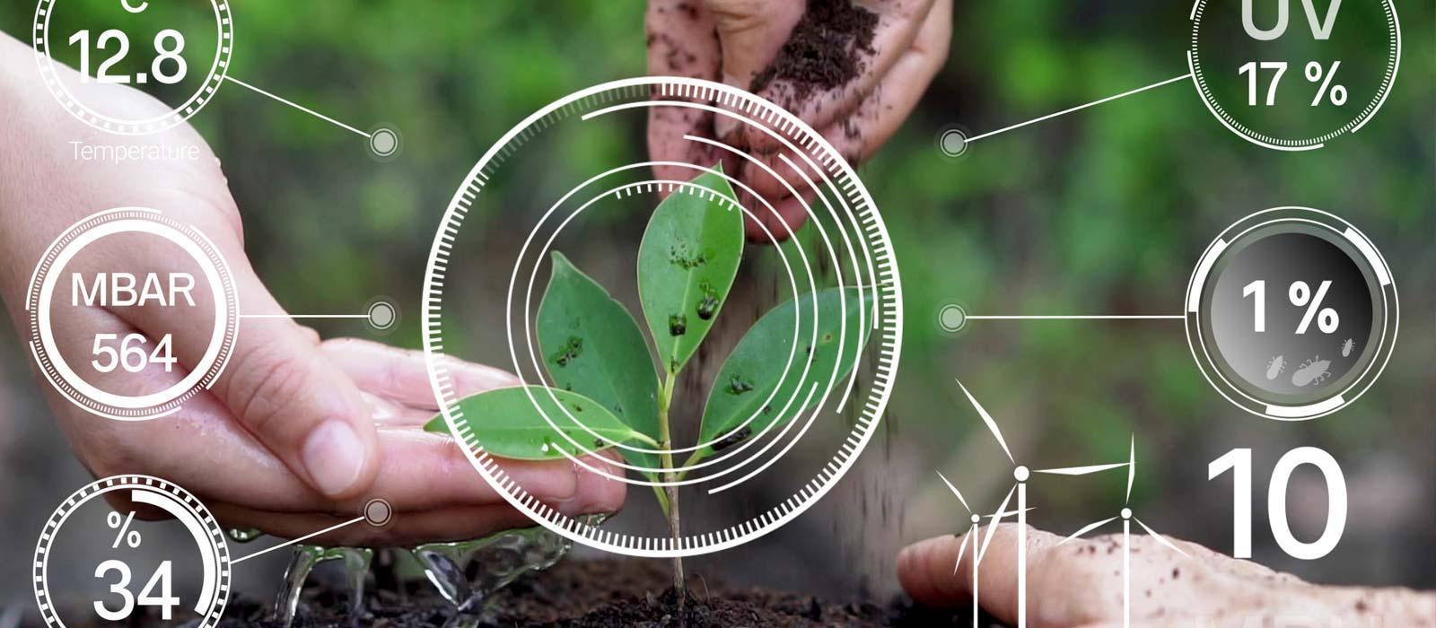 Greenhouse Productivity